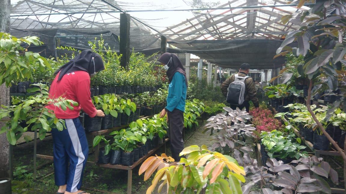 Kebun Hortikultura DPP Sediakan Benih Tanaman Unggul Berkualitas