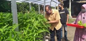 Hidroponik, Solusi Pertanian Perkotaan