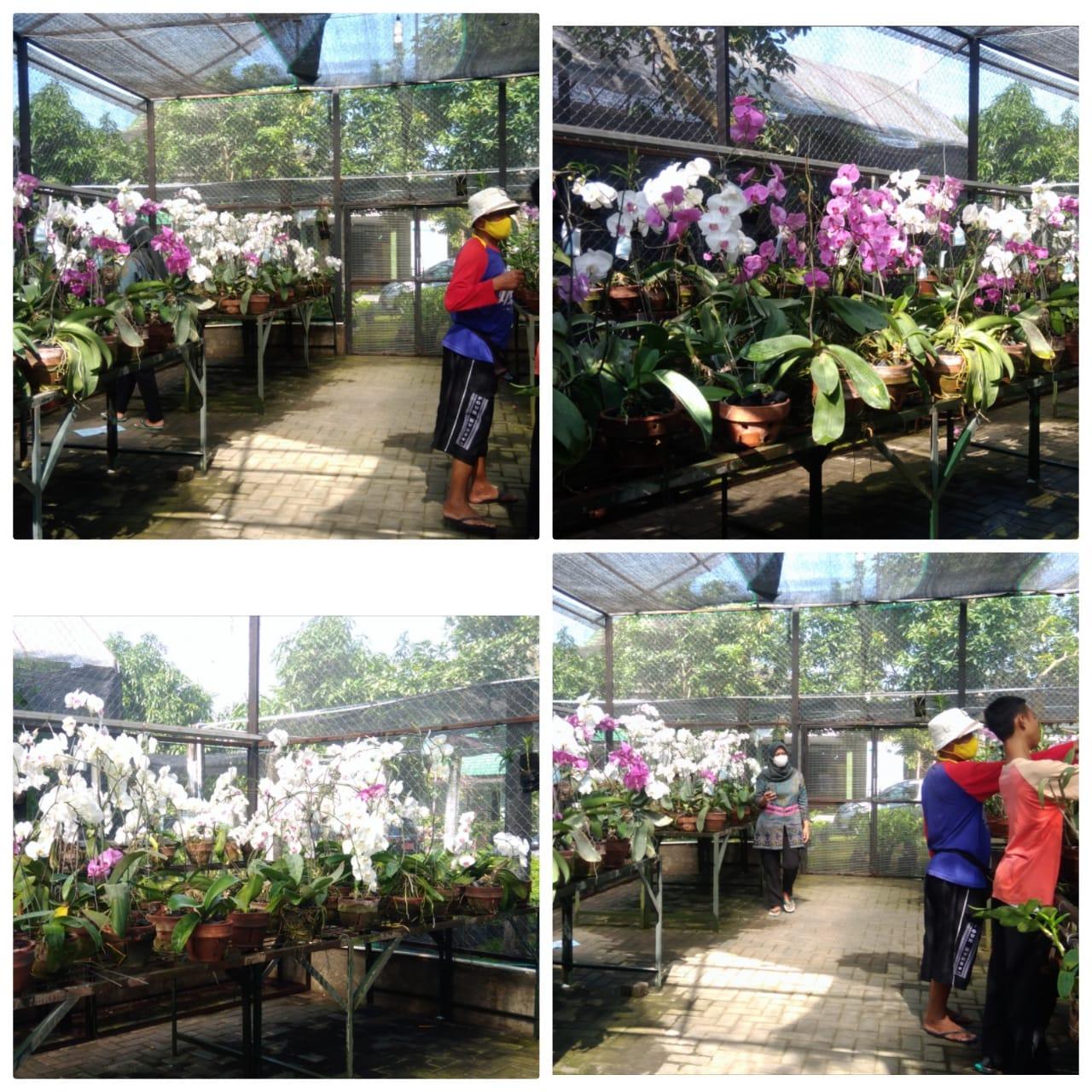 Green House Anggrek Dinas Pertanian Dan Pangan Kota Yogyakarta